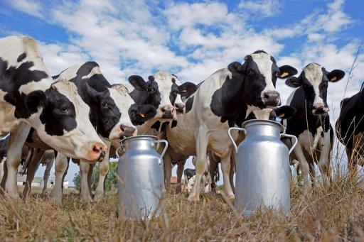 Resultado de imagem para Manejo correto eleva produção de gado leiteiro